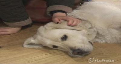 Bristol, cagnolini per tutti: pet therapy all