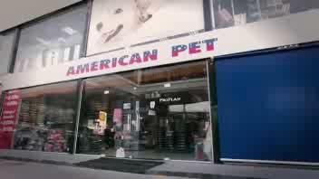 Cani di razza scambiati per randagi, le reazioni della ...