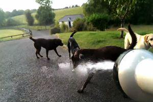 Cani stregati da un getto d'acqua, un divertimento da ...