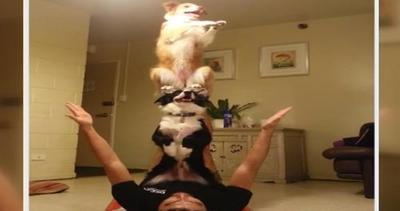 Acrobazie da cani: due border collie si esercitano a fare ...