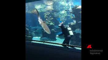 Nella vasca, carezze allo squalo zebra