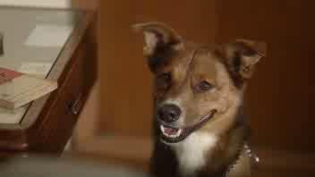 L'uomo, il cane e la donazione di organi