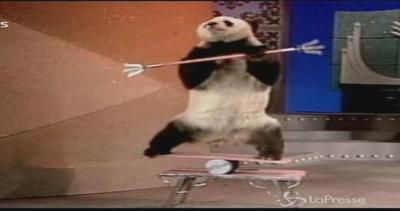 Panpan va in pensione: da acrobata a panda anziano da ...