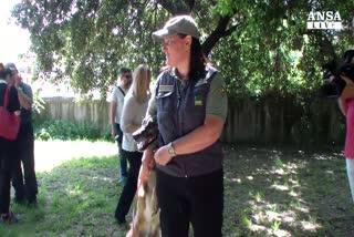 Roma, forestale contro il killer dei cani