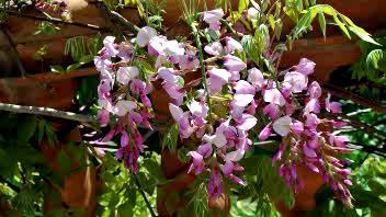 Festa tra i fiori ad Alassio