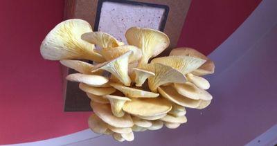 Expo, scatola per funghi ambasciatrice della ...