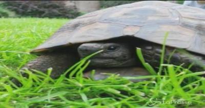 Bobby la tartaruga fuggitiva in cerca dell'amore