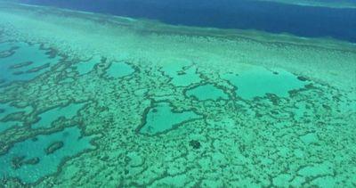Australia, la fragile bellezza della grande barriera ...