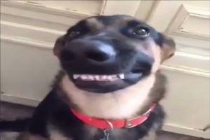 I dispetti del cane quando resta solo in casa