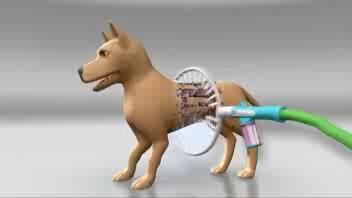 La toeletta al cane? Mai così facile