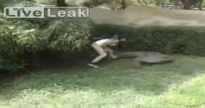 Ragazza spericolata fa visita al coccodrillo e rischia ...
