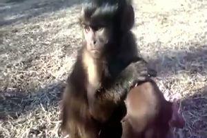 Splendida amicizia tra cane e scimmietta