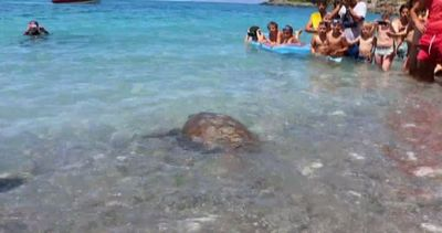 Imperatrice torna in mare, liberata a Maratea tartaruga ...