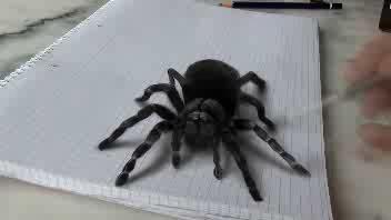 Il ragno è disegnato ma fa paura lo stesso