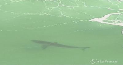 Australia, squalo attacca un surfista 32enne e lo ferisce ...