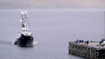 In Islanda riprende la caccia alle balene