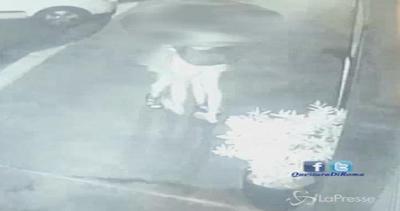 Roma, stupro 15enne: videocamere mostrano figura ...
