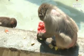 Al bioparco frutta contro l'afa per gli animali