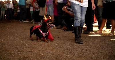 Cani mascherati anche da supereroi, ma per una buona causa