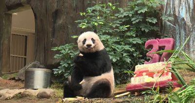 Jia Jia panda da record: festeggia 37 anni nel suo parco in ...