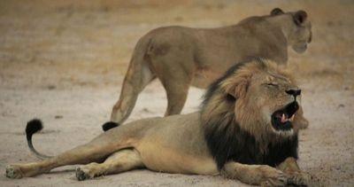 Ricordo del leone Cecil davanti a studio del dentista ...