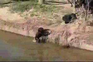 Una scimmia dispettosa