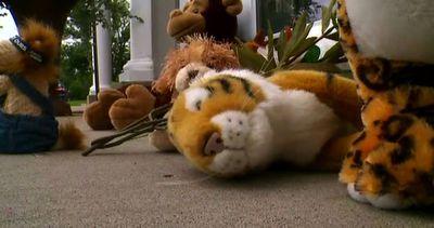 """""""Giustizia per Cecil"""", arriva la petizione online per il ..."""
