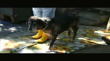 'Accumulatrice seriale' di animali, viveva con 51 cani ...