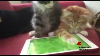 Il gatto e il topo, la caccia è virtuale