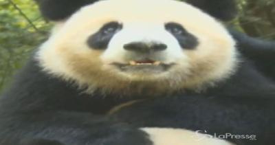 Tour di 26 giorni in Cina alla scoperta del panda gigante ...