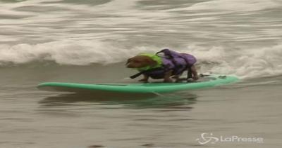 Surfing U.S.A., in California anche i cani vanno sulla ...