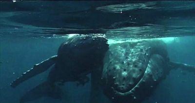 Canti e balli, il Madagascar festeggia l'arrivo delle balene