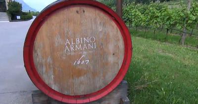 Albino Armani, dagli archeovini indigeni al biodinamico