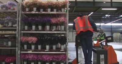 20 milioni di fiori viaggiano ogni giorno, ma come?