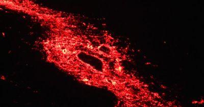 Spettacolare quarta eruzione nel 2015 del Piton de la ...