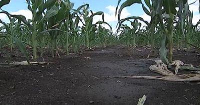 In Italia ogni giorno consumo di suolo pari a 90 campi di ...