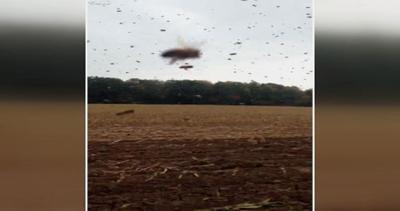 Via il miele dagli alveari: migliaia di api impazzite si ...