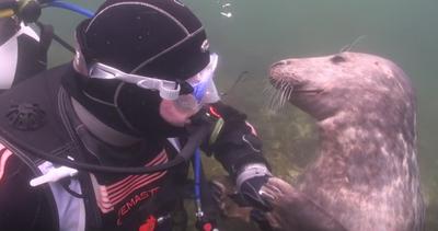 L'incredibile incontro tra un sub e una foca