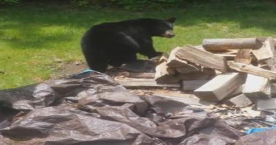 Gli uomini non sono cibo. Ma l'orso non è d'accordo..