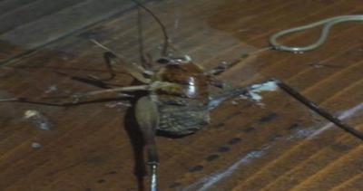 Paura degli insetti? Il contenuto è ancora più spaventoso