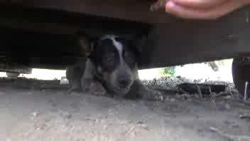 Il cane che ha vissuto per 11 mesi sotto un cassonetto