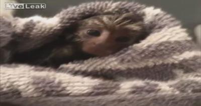 Mini scimmia alle prese con il bagnetto: tenerissima in ...