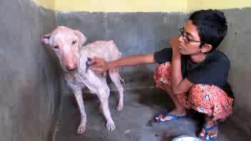 Abbandonato per strada il cane trova nuova vita