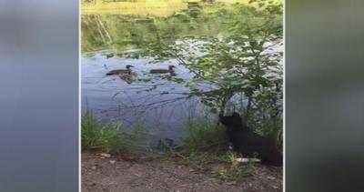 Micio spavaldo non teme l'acqua: tuffo per cacciare le ...