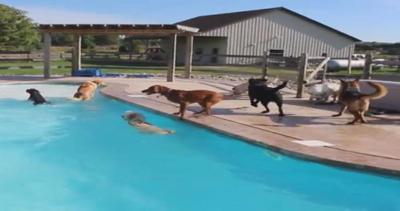 Tutti insieme in piscina: divertimenti e tuffi all'albergo ...