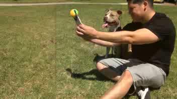 Una palla da tennis per i selfie col cane