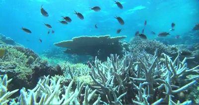 Pericolo Nino: nel 2016 barriere coralline a rischio ...