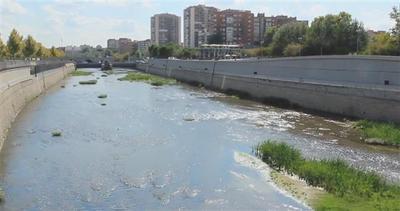 Madrid, il mistero degli ortaggi coltivati nel fiume