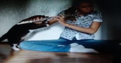 Il gatto che non ama il flauto...aggredisce la padroncina