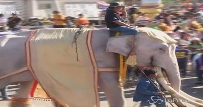 Parata di elefanti da record: 250 pachidermi in fila